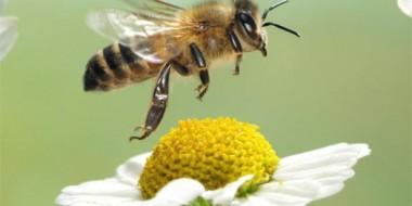 Vanishing-of-the-Bees
