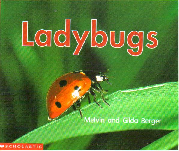 melvingildabergerladybugs