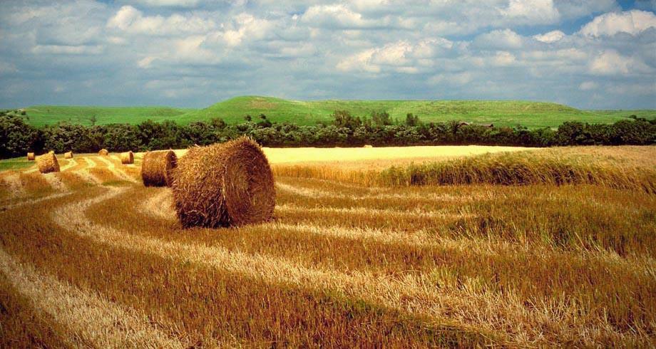 Prairie hayfield in summer