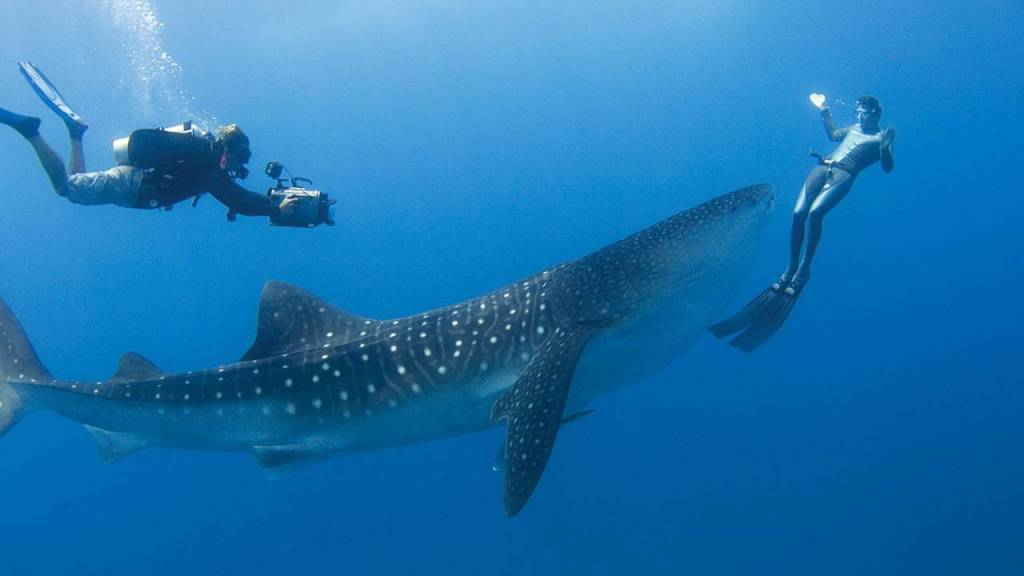 original_Best_Places_to_Swim_with_Whale_Sharks-Maldives-Four_Seasons_Landaa_Giraavaru